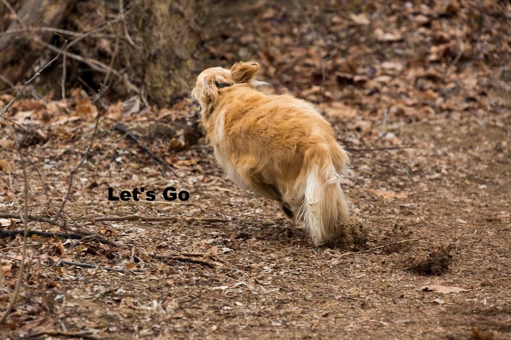 dog playing-3.jpg