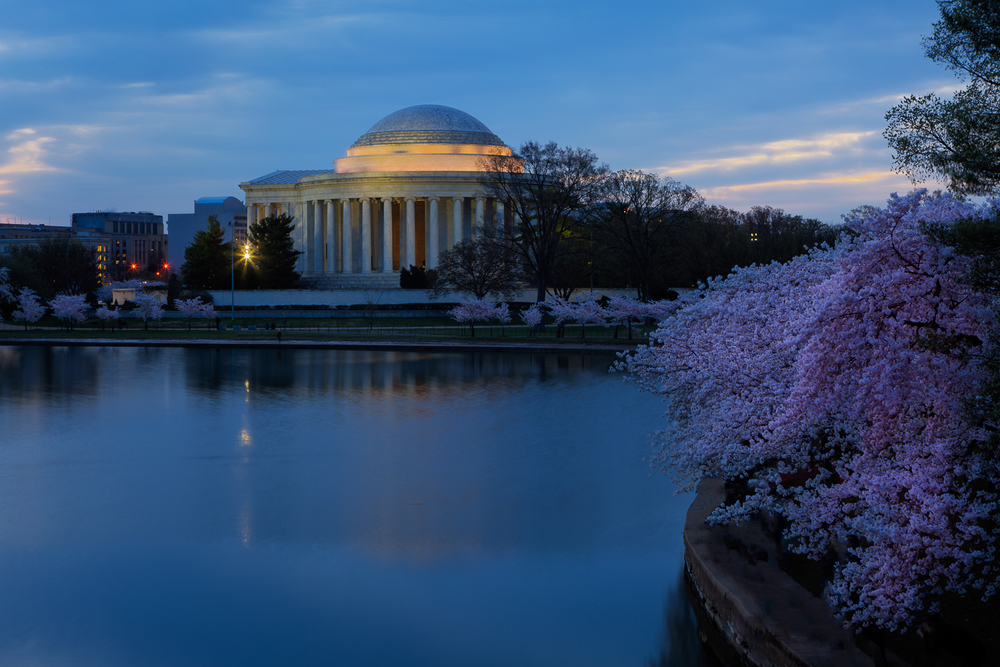 Pre-dawnCherry Blossoms at the Jefferson Memorial