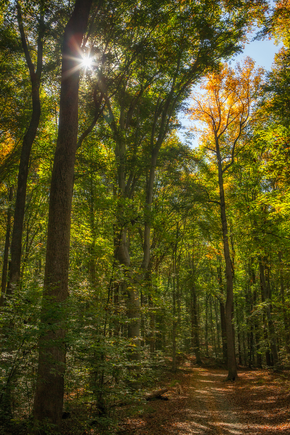 Taken on October 21st in the woods near our house.  Starting to change but not quite.