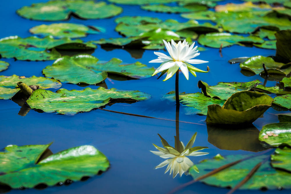 Reflections of a Lilly
