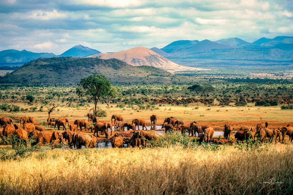 Tsavo Preserve in Kenya