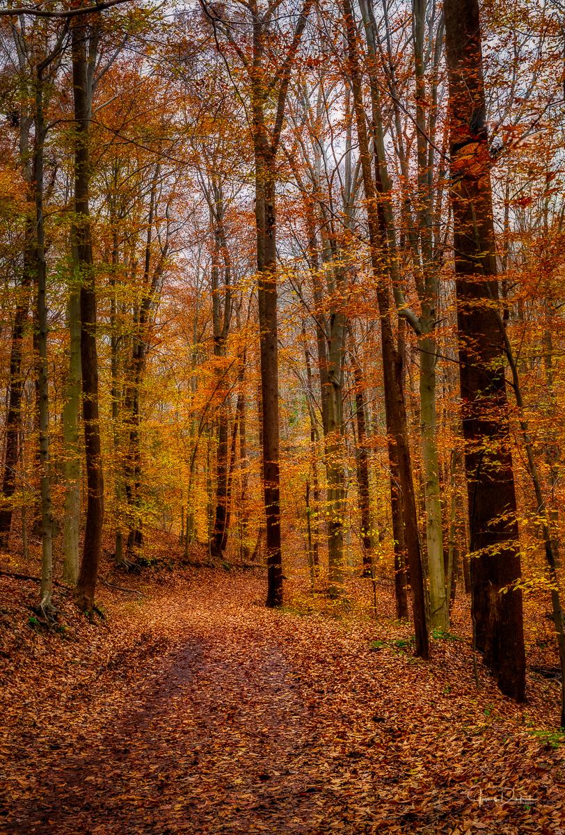 End of Autumn-1.jpg