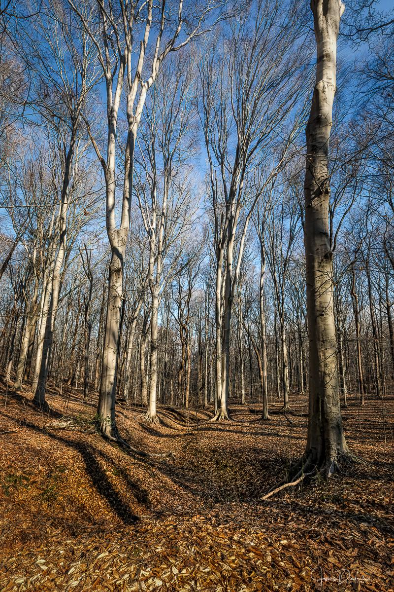 Winter Woods-1.jpg