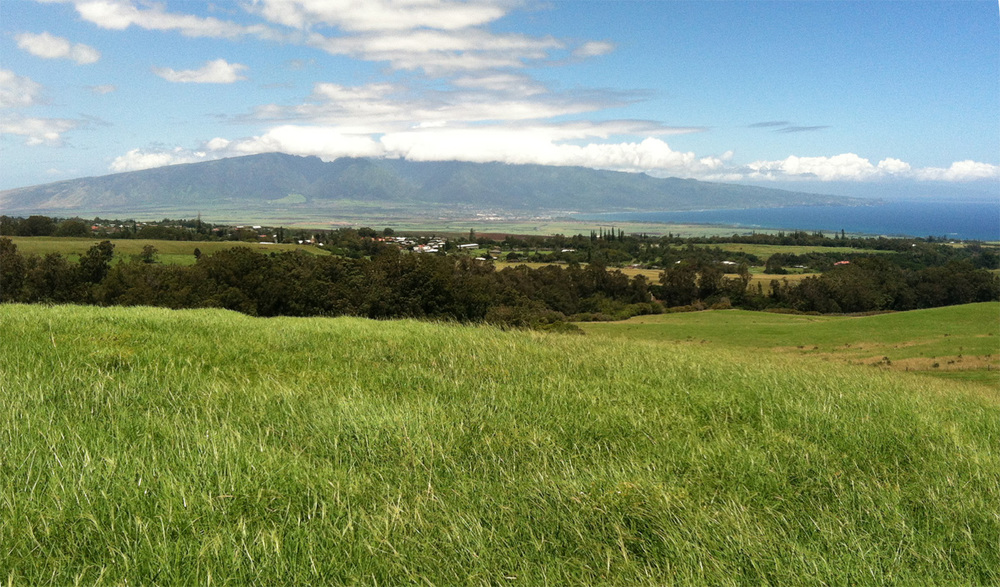 MAIN pasture imakai of piiholo hill to kahului.jpg