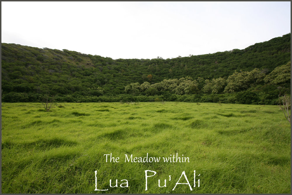 meadow in pu ali finished.jpg