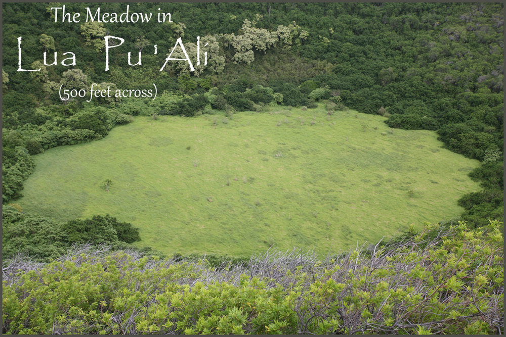 the meadow in pu ali from rim finished.jpg