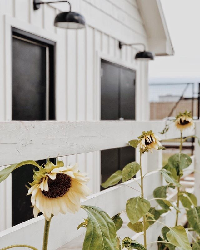 Is there anything more classic than a white picket fence? 📷@whitetailfarmhouse