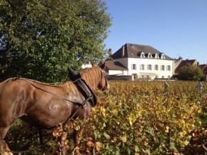 Horse in Clos.jpg