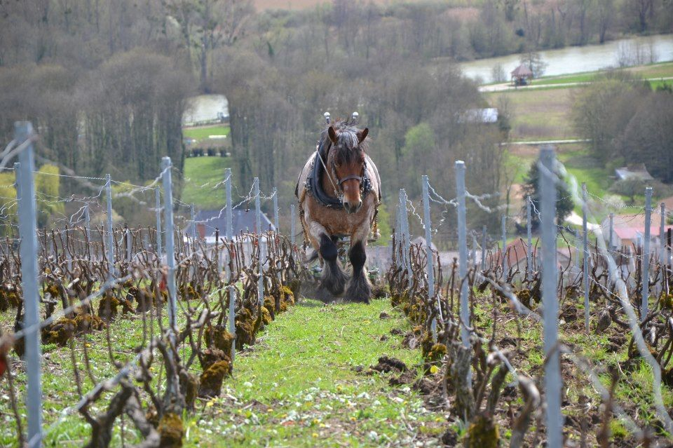 The Champagne vineyards of Georges Laval in Cumiéres. Organic and garbage-free since 1970...