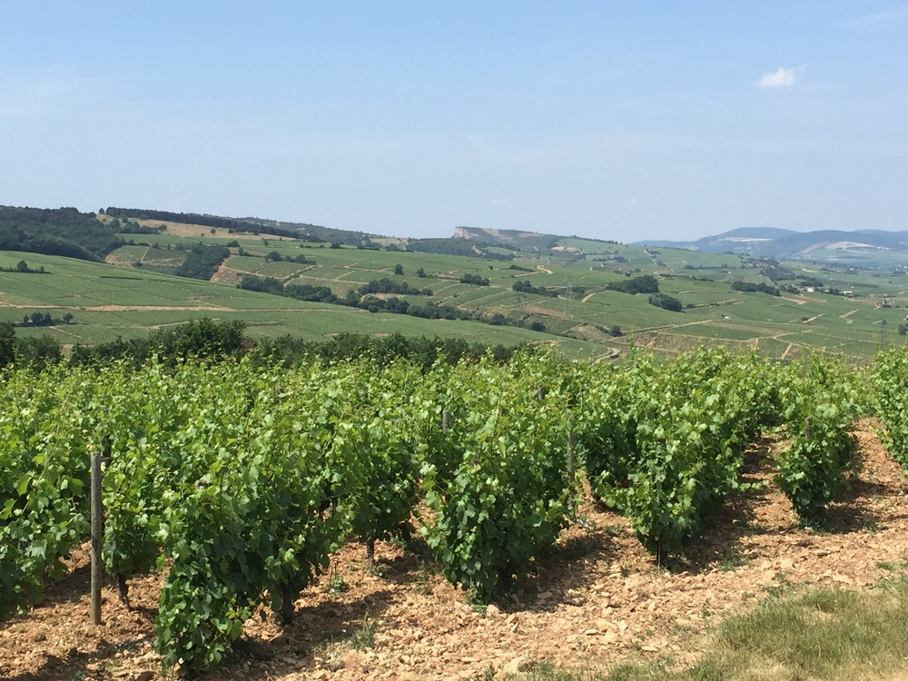 Overlooking the entirety of Pouilly-Fuissé from the top of the hill at Chateau des Rontets