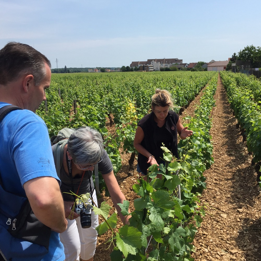 In the vineyard with Alexandrine in Gevrey