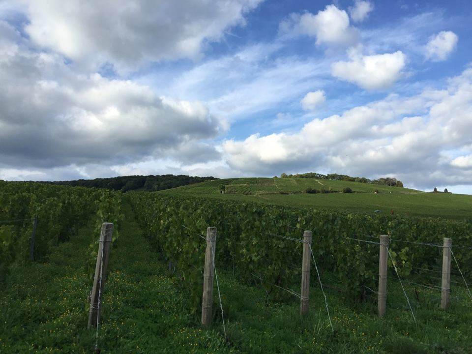 George Laval's Les Chênes vineyard in Cumières
