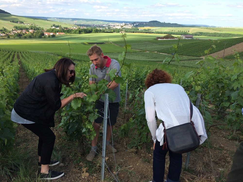 Aurélien showing Judy & Becky his biodynamic vines on the slopes of Chavot
