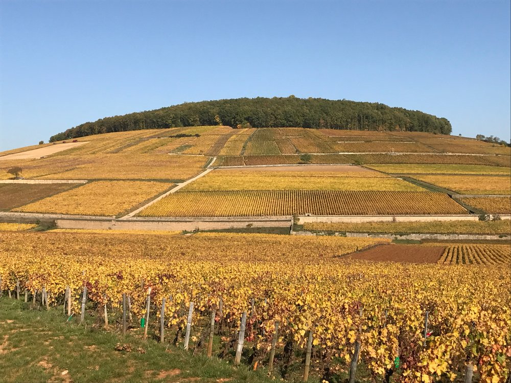 More beauty - the hill of Corton