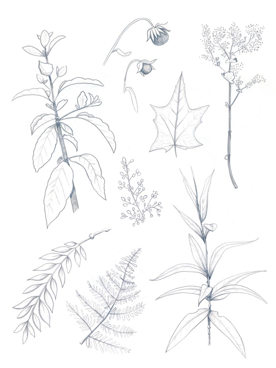 BotanicalSketchingPart2_01