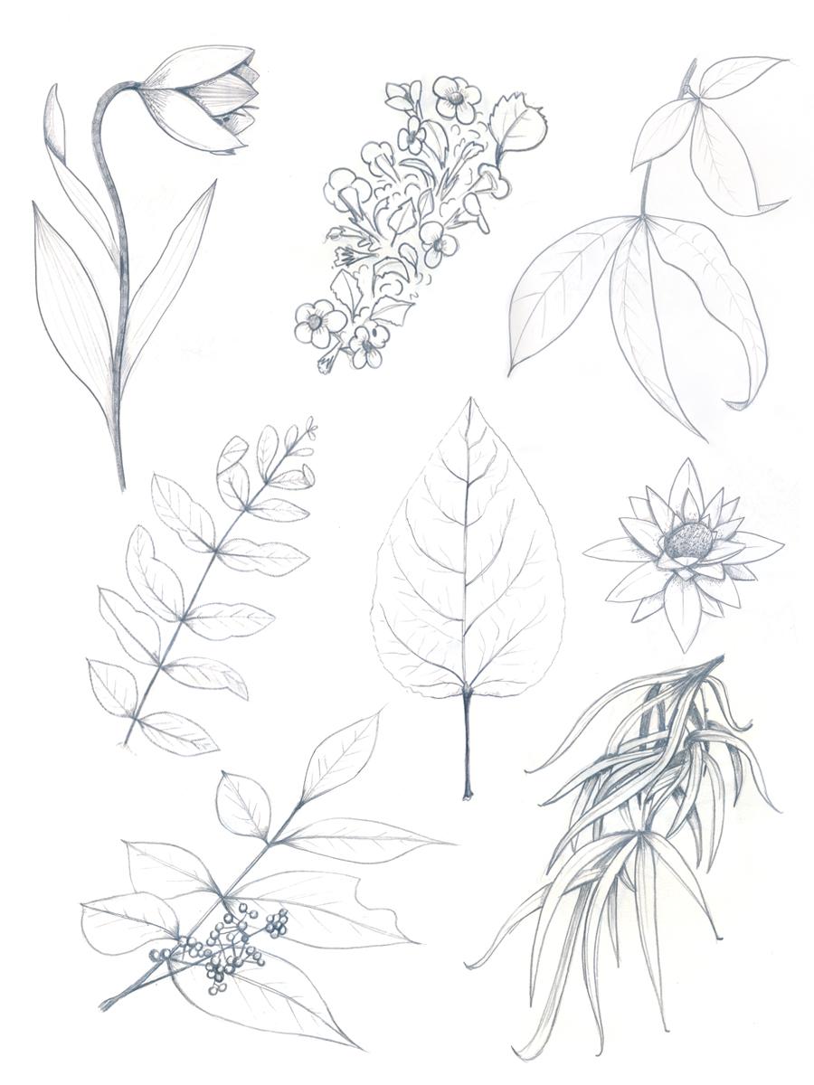 BotanicalSketchingPart2_02