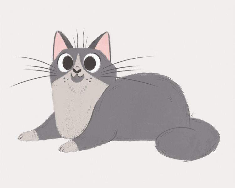 grey-cat.jpg