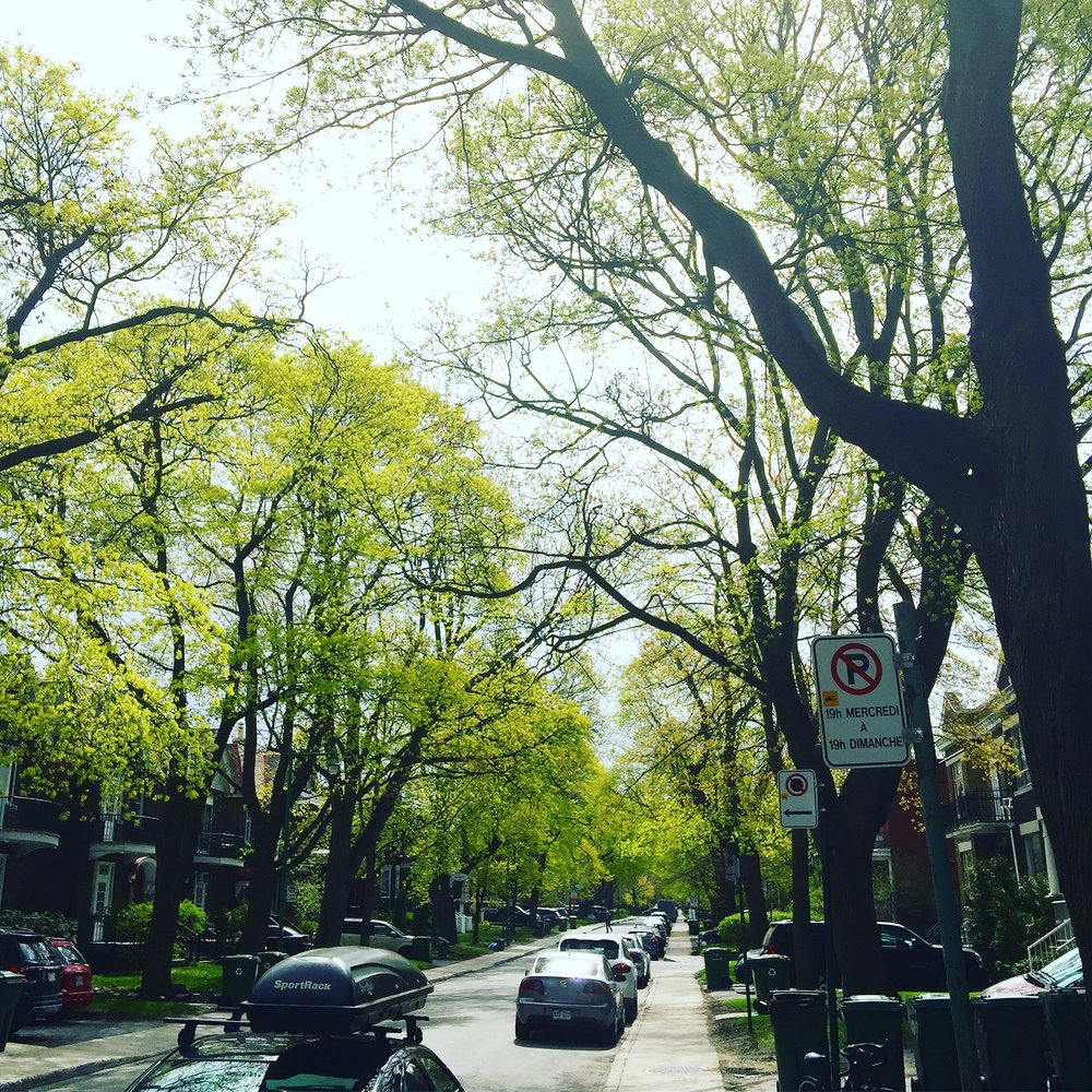 Outremont Avenue south of Bernard Avenue