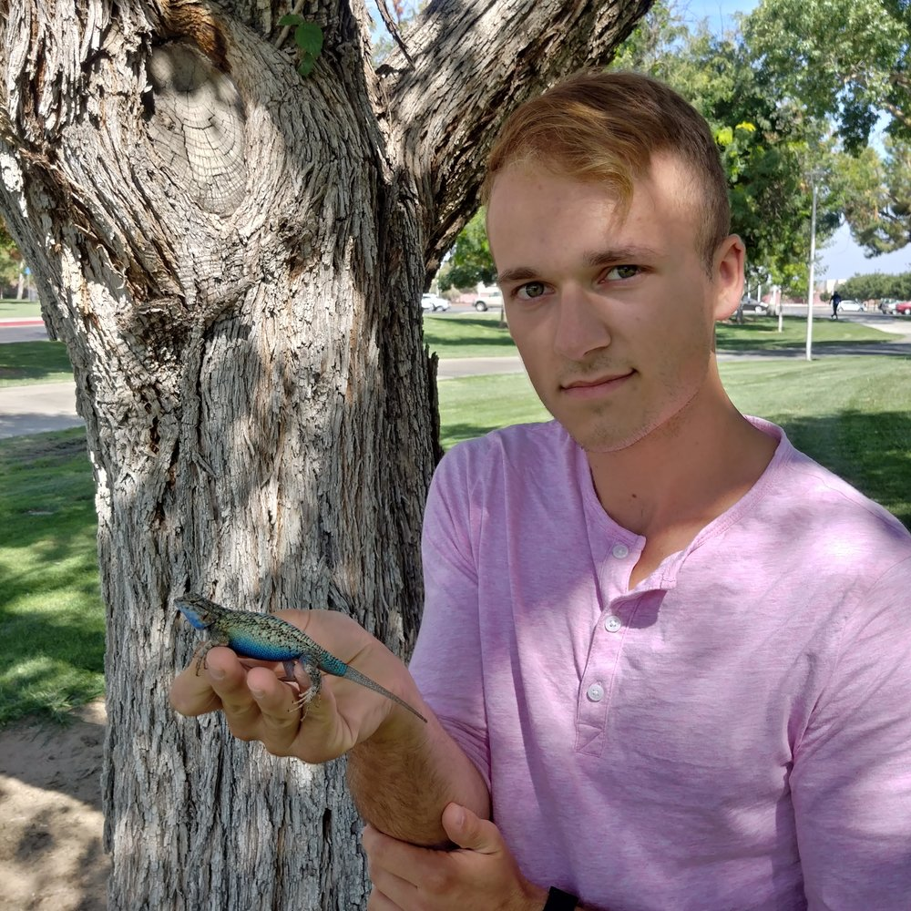 Dalton holding an impressive male Western Fence Lizard ( Sceloporus occidentalis ) on the Fresno State campus.
