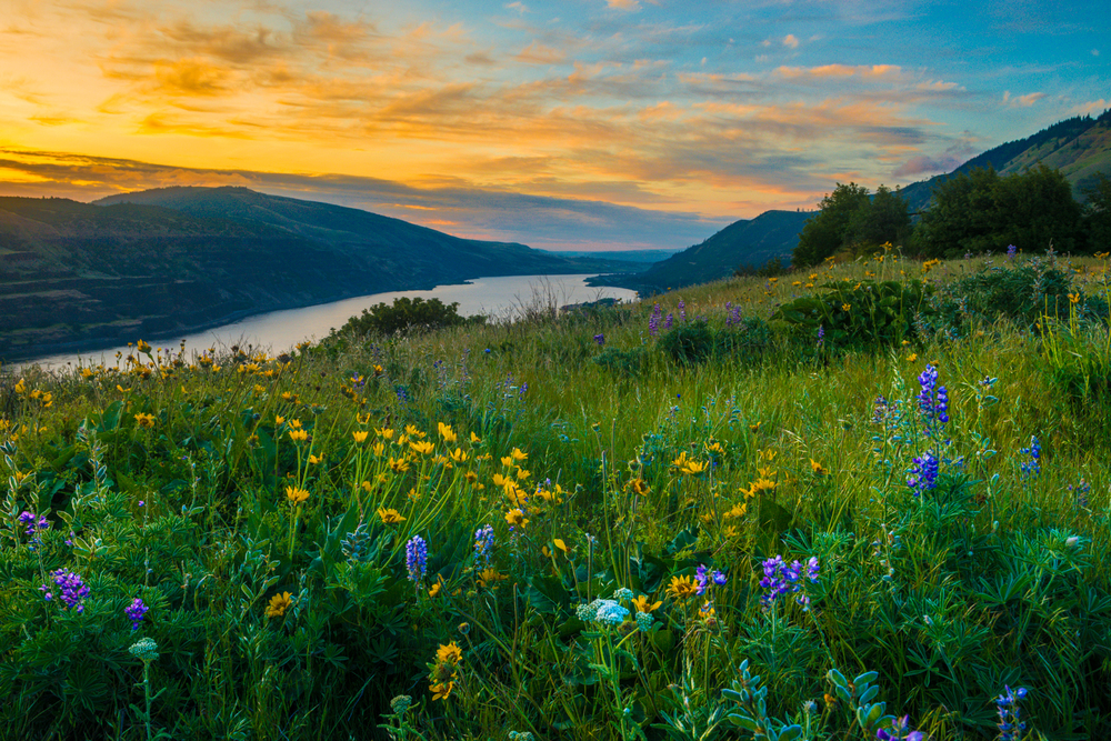 Wildflowers on Rowena Crest