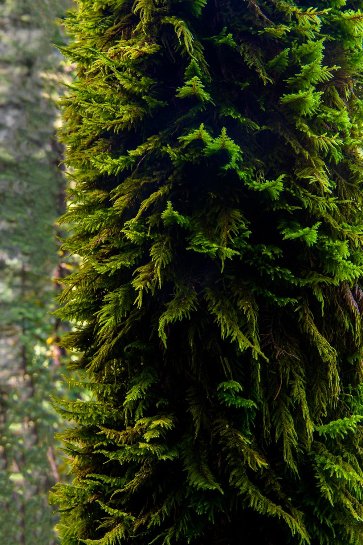 Jurassic Moss