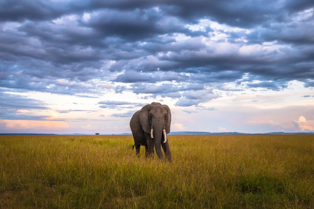 MasaiMara.D800E.20160302-396.jpg