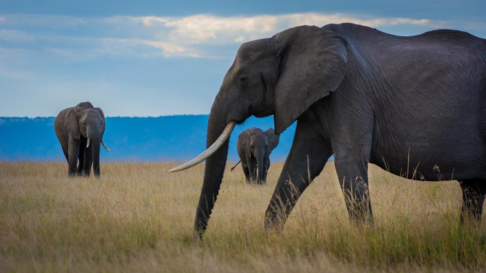 MasaiMara.D810.20160302-49.jpg