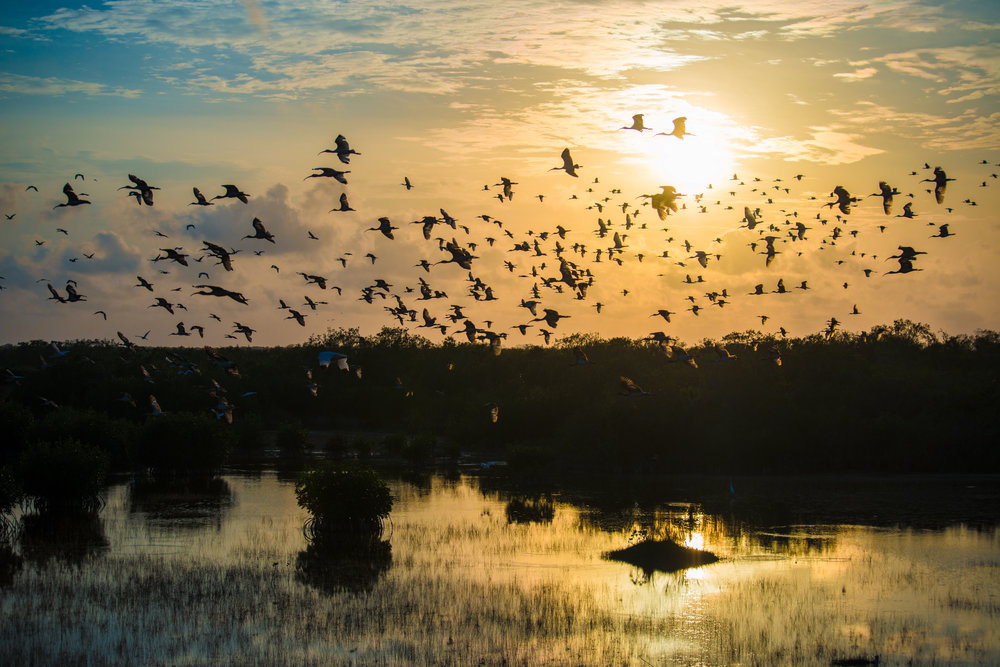 Everglades.20160504-100.2500px.jpg