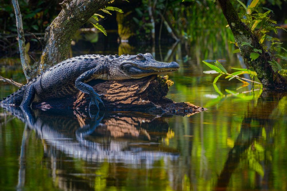 Everglades20160207-308.2500px.jpg