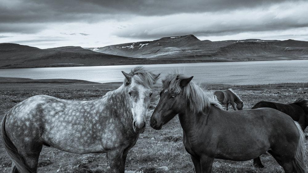 Iceland20160709-12.2500px.jpg