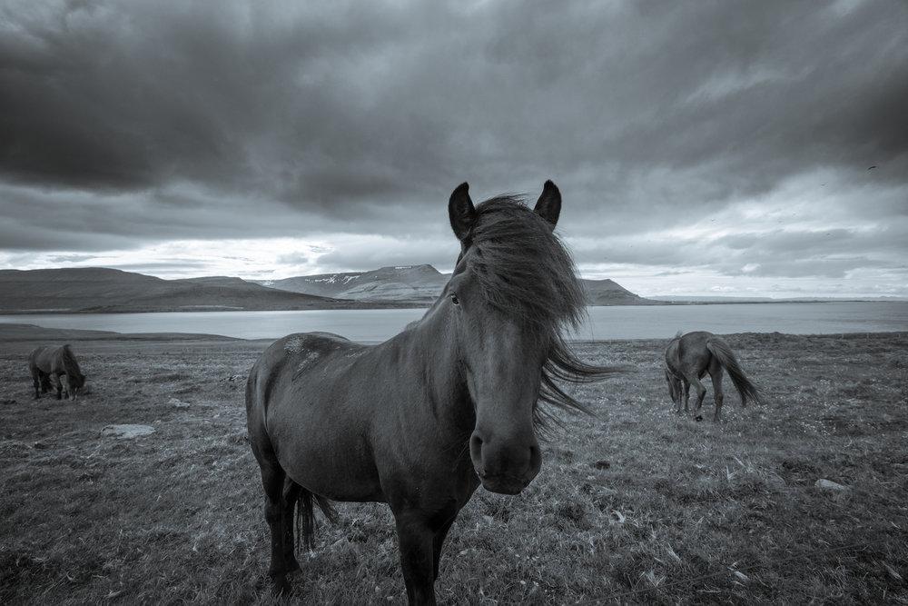 Iceland20160709-37-2.2500px.jpg
