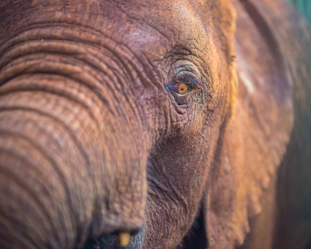 MasaiMara.20160305-95.1500px.jpg