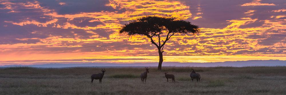 MasaiMara.D800E.20150302-332.1500px.jpg