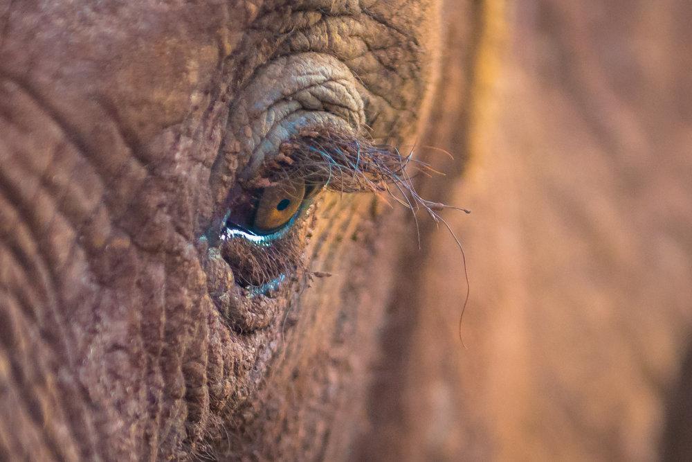 MasaiMara.20160305-90.1500px.jpg