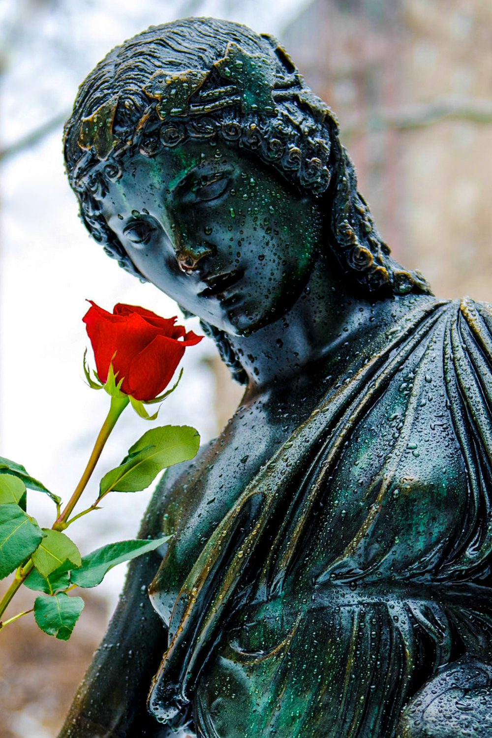 A rose for the sculpture of a woman in Rittenhouse Square on Valentines Day 2014.