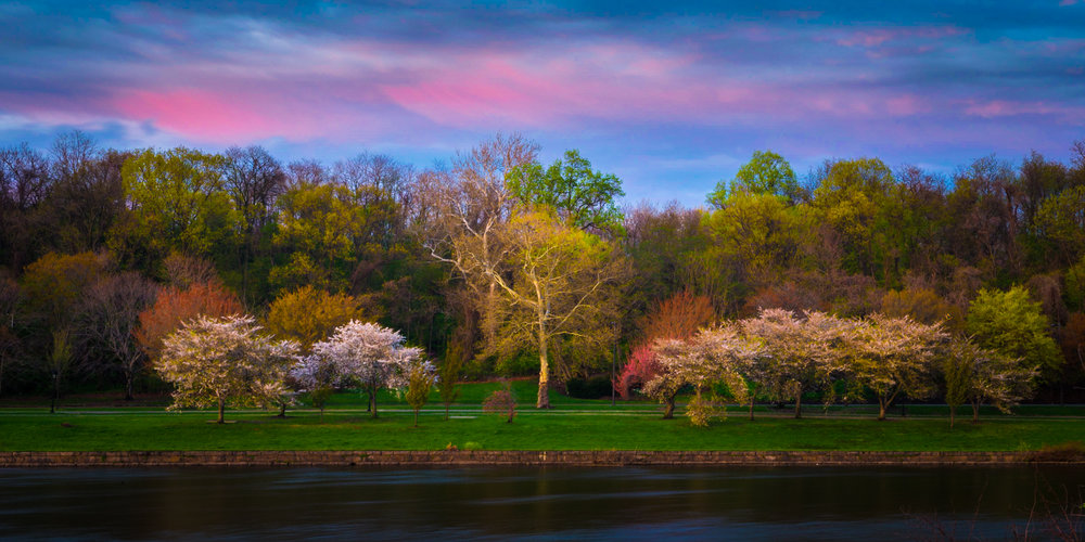 Trees along the Schuylkill River begin to bloom in spring while beautiful colors linger in the sky after sunset