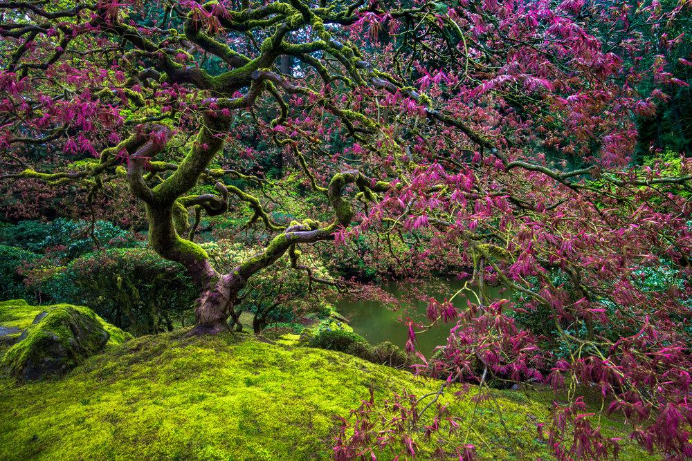 Oregon_042117._CVB8133-Edit-Edit.jpg