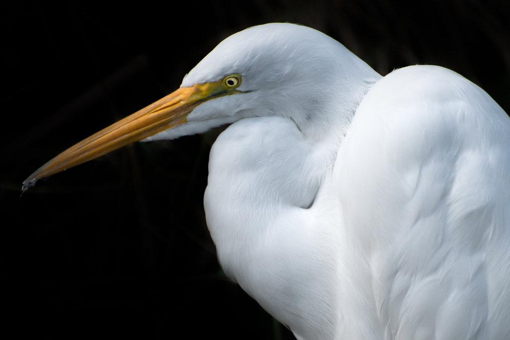 Everglades_012317.CVB_0581.jpg