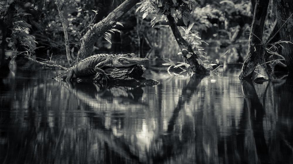 Everglades20160207-305-Edit-Edit-2.jpg