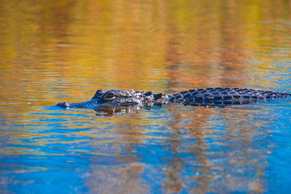 Everglades20160207-485.jpg