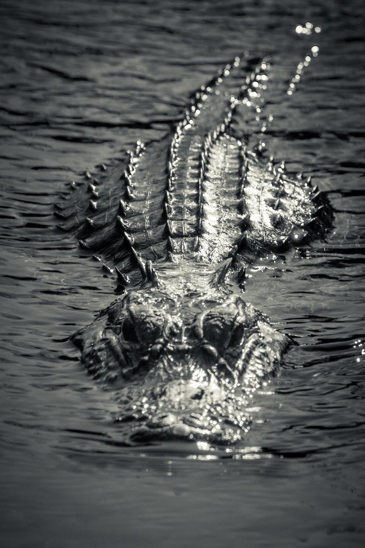 Everglades20160207-506.jpg