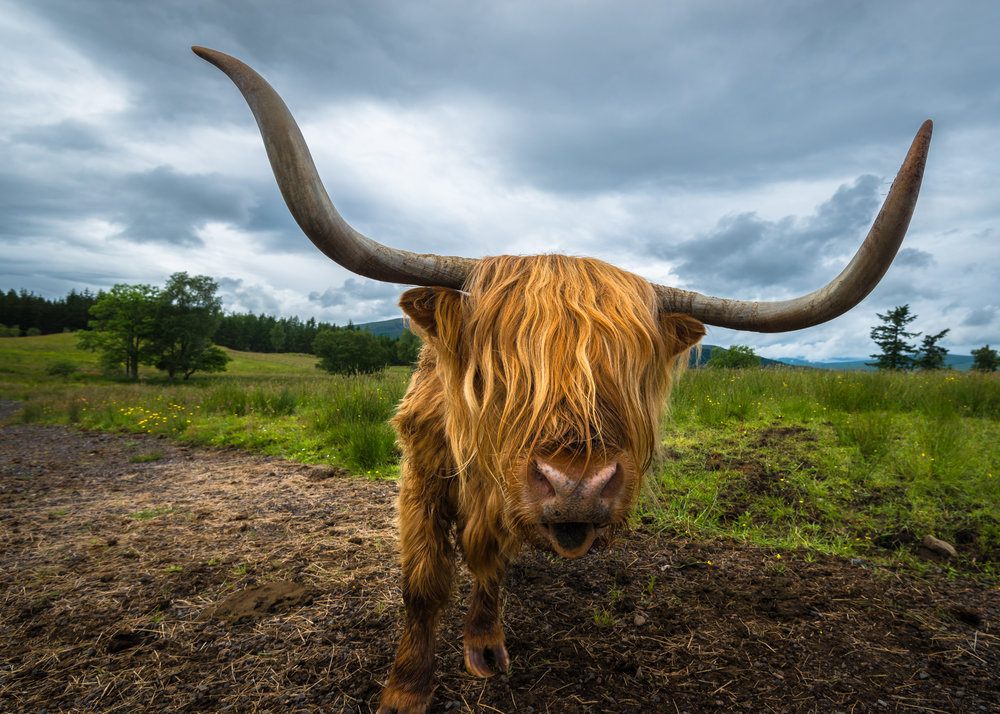 Horns and Hair.2500px.jpg