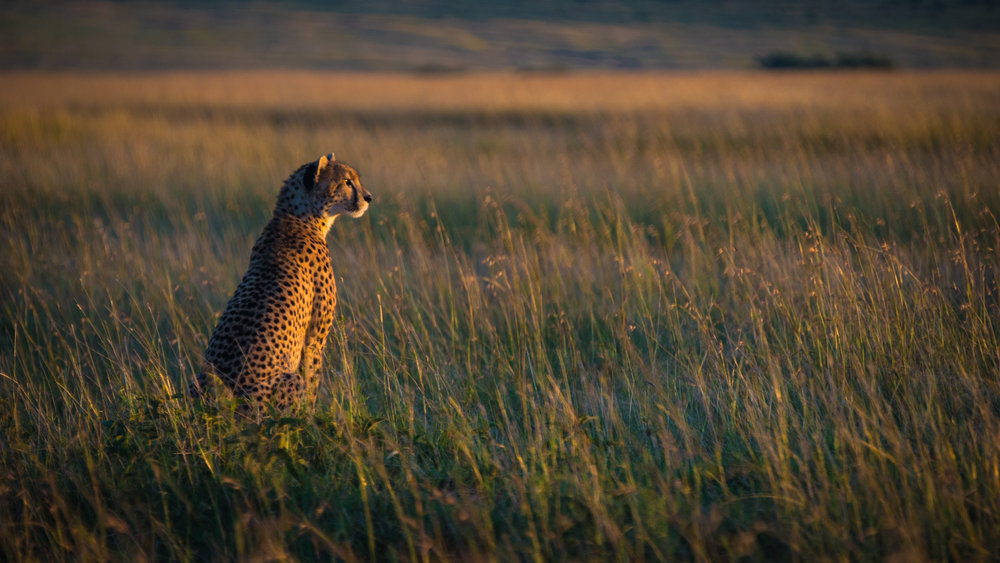 MasaiMara.D810.20150302-121.1500px.jpg