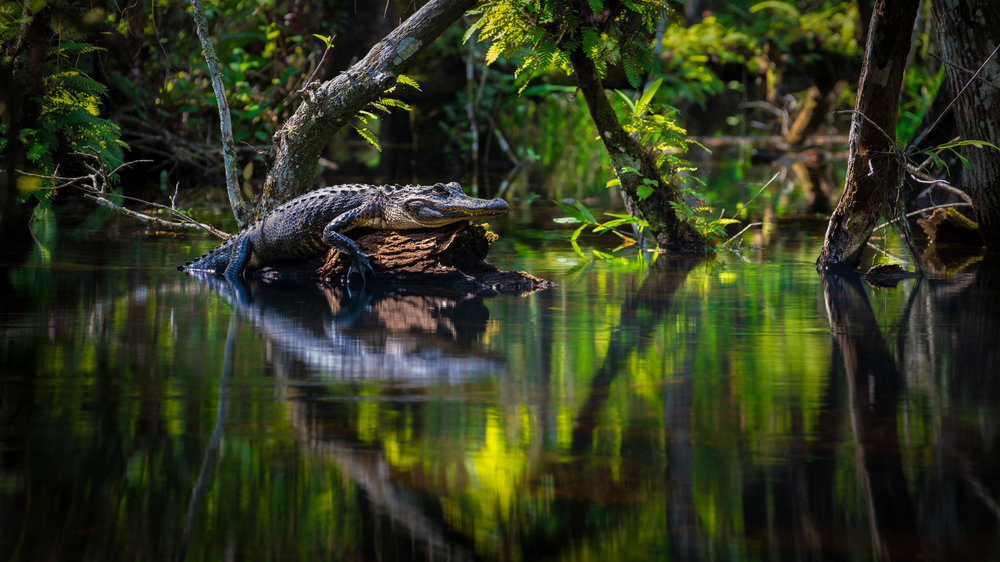 Everglades20160207-305-Edit-Edit-2-2.jpg