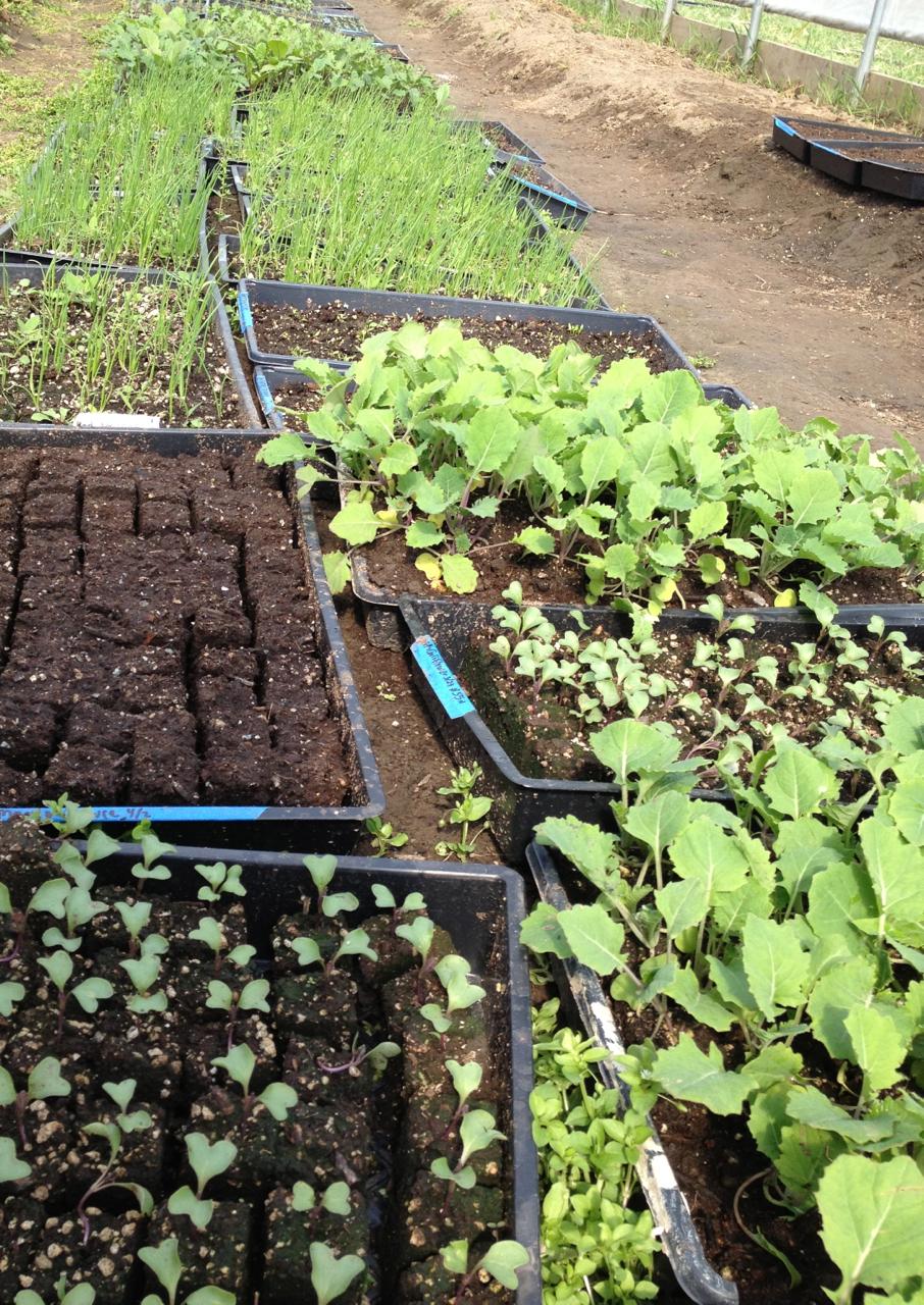 seedling 2013