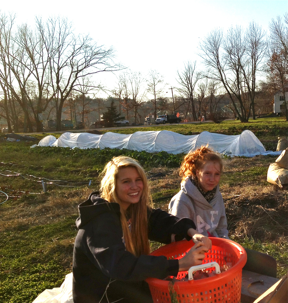 Farmer Erin's daughters planting garlic at our original farm in West Newbury