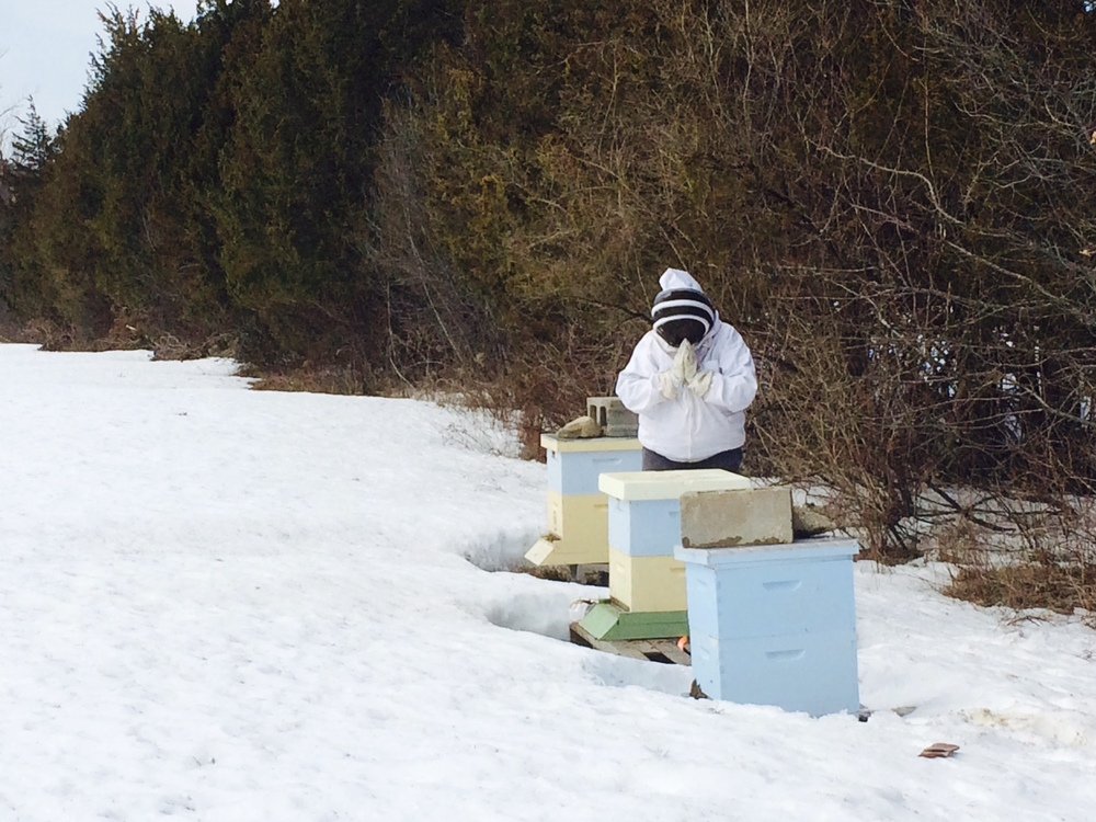 Sending loving kindness  and asking permission from the bees to enter the hive