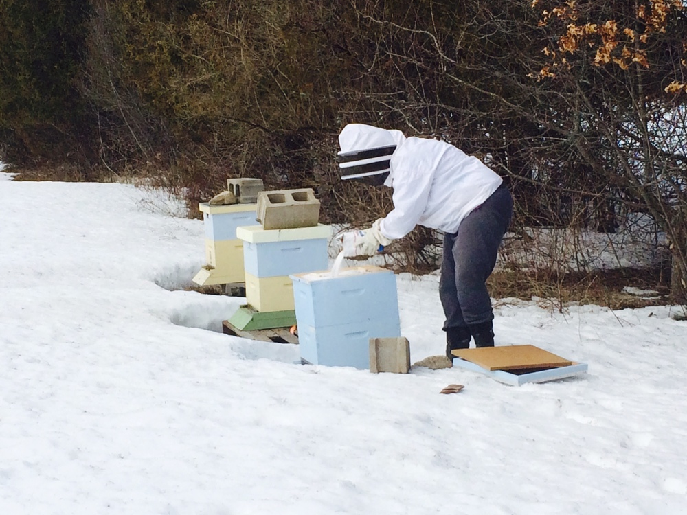 Pouring sugar on the inner tray of the hive so bee can access it.