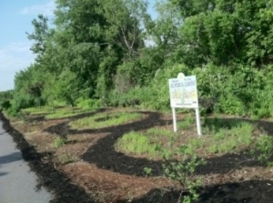 - Crop Circles: a phytoremediation art project at GAL's  Alchemical  Garden at Newburport's Clipper Rail Trail