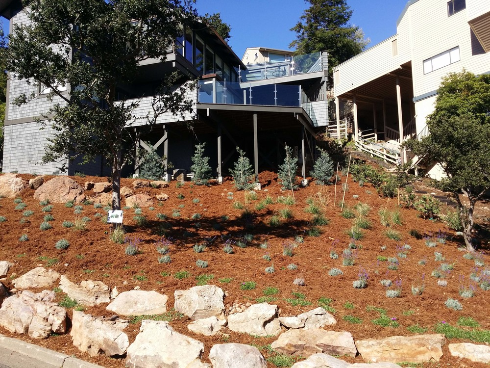San Rafael Landscape Designer